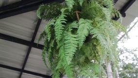 Plafond op de groene pot die van de bladereninstallatie wordt verfraaid stock video