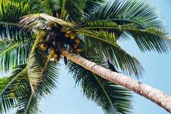Plage à la plage de Palolem, Goa Images libres de droits