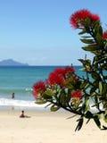 Plage : arbre et nageurs fleurissants de pohutukawa Photos stock