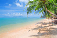 Plage avec le cocotier et la mer Photos libres de droits