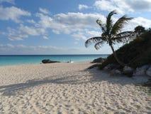 Plage avec le sable et les palmiers Photographie stock libre de droits
