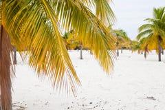 Plage avec le sable et les paumes blancs photo stock
