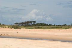 Plage avec les arbres et le flot de marée photographie stock libre de droits