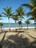 Plage avec un bon nombre de pied de noix de coco, endroit incroyablement bel, un fond parfait image stock