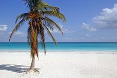 Plage blanche de sable avec le cocotier Photographie stock libre de droits