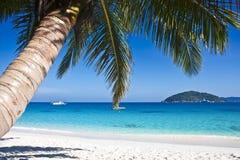 Plage blanche tropicale de sable avec des palmiers Photos stock