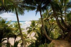 Plage brésilienne tropicale Photos stock