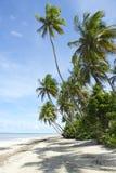 Plage brésilienne tropicale de palmiers Photographie stock libre de droits