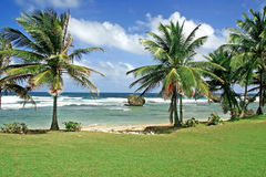 Plage chez Bathsheba, Barbade Photo stock