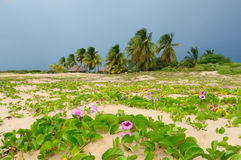 Plage colombienne Images libres de droits