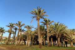 Plage Costa del Sol (côte du Sun), Malaga en Andalousie, Espagne Images libres de droits