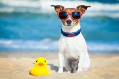 Plage d'été de chien Images libres de droits
