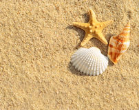 Plage d'étoiles de mer Image stock