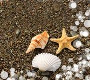 Plage d'étoiles de mer Photo libre de droits