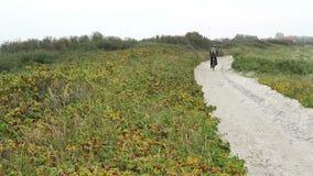 Plage d'île Mecklenburg-Vorpommern, Allemagne de Hiddensee banque de vidéos