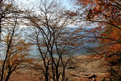 plage d'automne Images stock