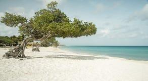 Plage d'Eagle sur l'île d'Aruba Photographie stock libre de droits