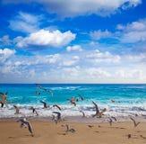 Plage d'Island de chanteur au Palm Beach la Floride USA Image libre de droits