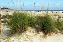 Plage d'océan avec le roseau des sables Image stock