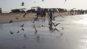 Plage d'oiseau Photo stock
