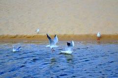 Plage d'oiseaux de vol Images libres de droits