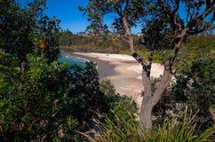Plage d'Oxley à l'Australie de Macquarie de port Photographie stock