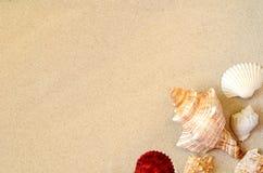 Plage d'?t? Seashell sur le sable Vue sup?rieure images libres de droits
