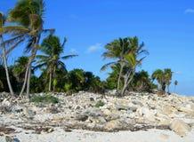Plage dans le Carribeans Image libre de droits