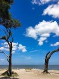 Plage de bois de flottage sur l'île de Jekyll, la Géorgie Photographie stock