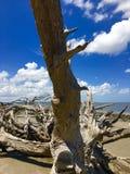 Plage de bois de flottage sur l'île de Jekyll, la Géorgie Photo stock