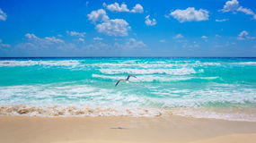 Plage de Cancun Photos stock