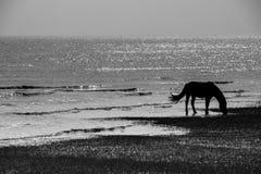 Plage de cheval Image libre de droits