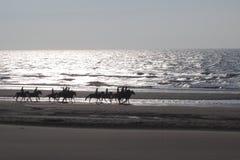 Plage de chevaux Photos stock