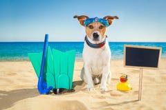 Plage de chien de surfer Photographie stock libre de droits