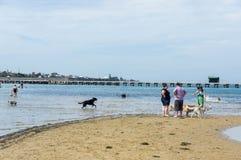 Plage de chien de rue de Sandown à Brighton dans les banlieues orientales intérieures de bayside photo libre de droits