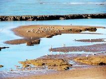 Plage de Chipiona à Cadix Images libres de droits