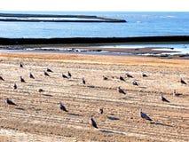 Plage de Chipiona à Cadix Photographie stock libre de droits