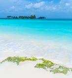 Plage de corail blanche de sable, Maldives image libre de droits