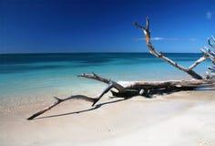 Plage de drachmes de Caribic Image stock