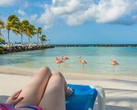 Plage de flamants dans Aruba Repos de jeune femme Photos stock