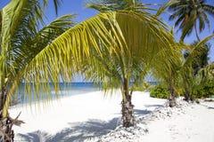 Plage de Grand Cayman Photos libres de droits