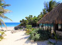 Plage de hutte de palapa de palmiers de noix de coco Images stock