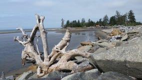 Plage de l'océan pacifique avec le bois de flottage Image libre de droits