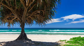 Plage de la Gold Coast Images libres de droits
