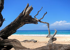 Plage de Maui, Hawaï image stock