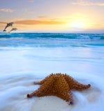 Plage de mer d'île tropicale d'art belle Photographie stock