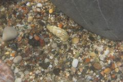 Plage de mer d'ermite de crabe Images libres de droits