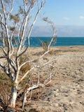 Plage de mer morte avec des montagnes du ` s de la Jordanie à l'arrière-plan Photos stock