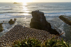 Plage de Muriwai images stock