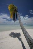 Plage de palmier de South Pacific Photos stock